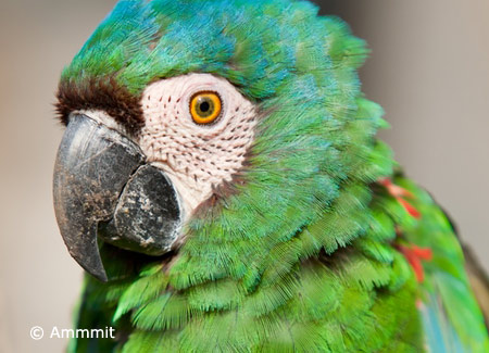 severe-macaw-up-close
